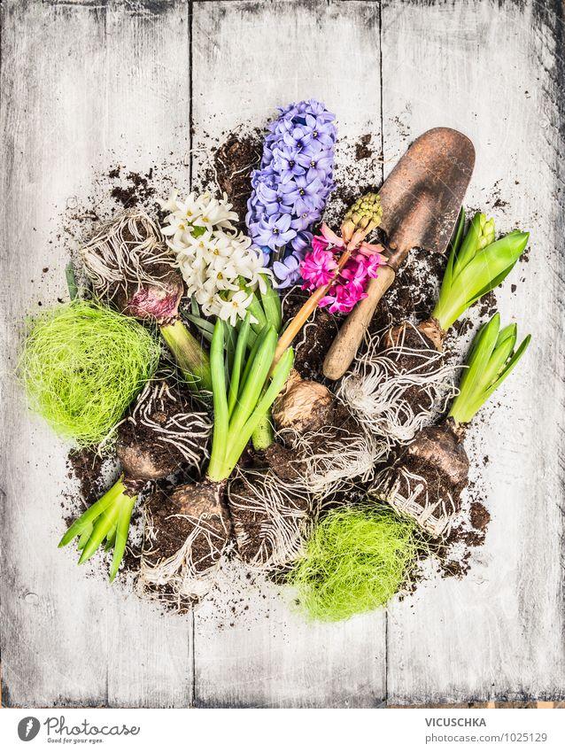 Frühlingsblumen Hyazinthe mit Zwiebeln, Knollen und Schaufel Stil Design Freizeit & Hobby Sommer Garten Dekoration & Verzierung Natur Pflanze Blume violett rosa