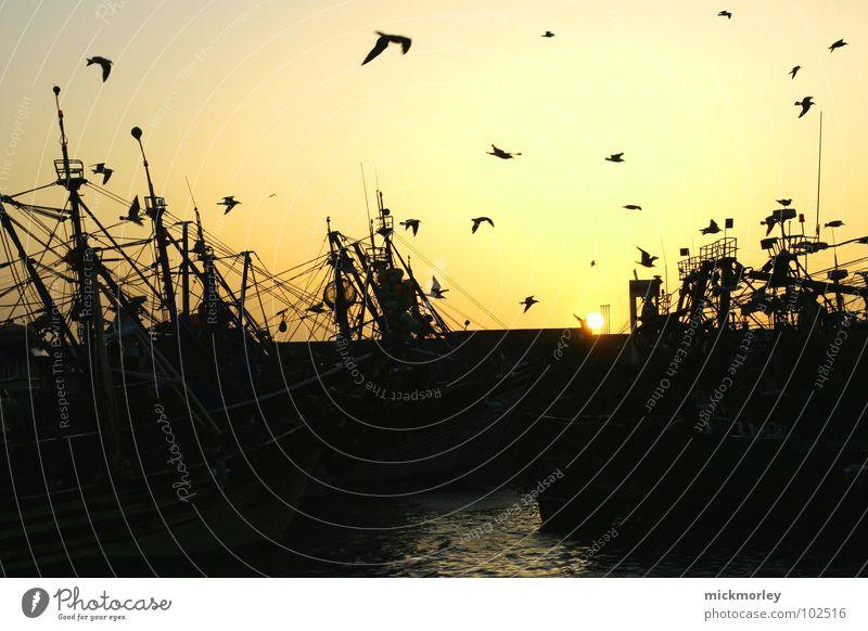 hafenidylle Möwe Meer Fischerboot See Angeln Angler Vogel Sonnenuntergang Sonnenaufgang schön Stimmung Wasserfahrzeug Pelikan Strand Küste fischerkutter Abend