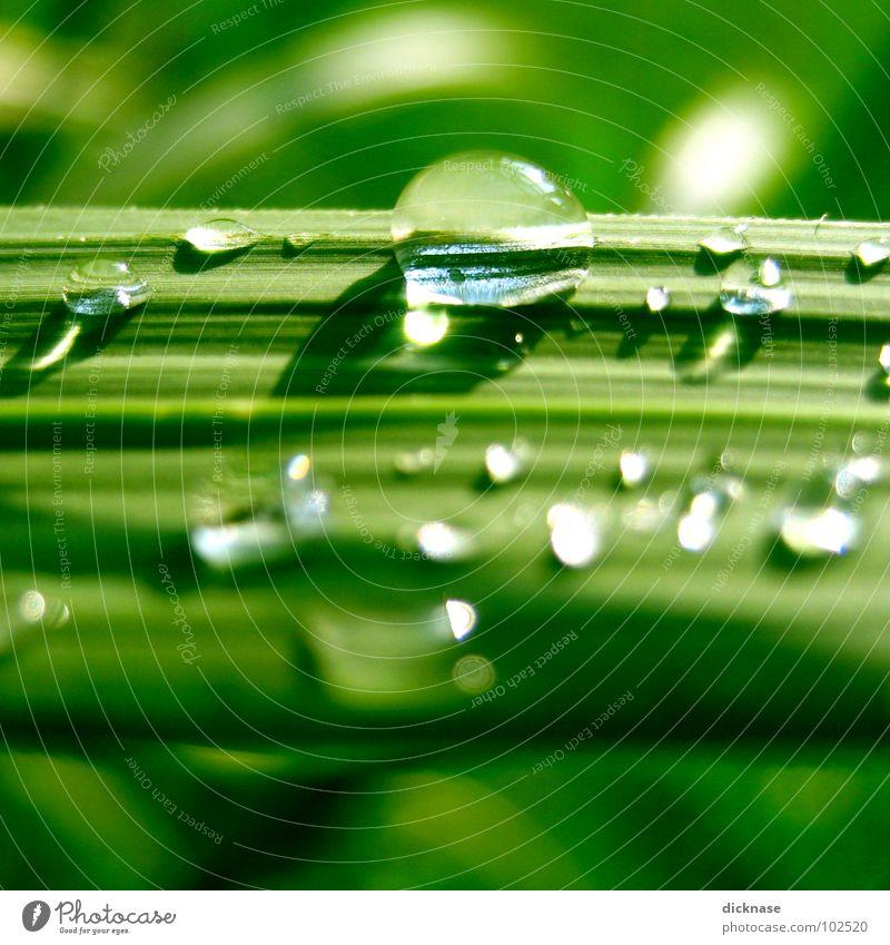 raindrops can´t fall on my head... Wasser grün schön Sommer Meer Strand Erholung Gras Wassertropfen Streifen Schilfrohr Spa Zoomeffekt liniert