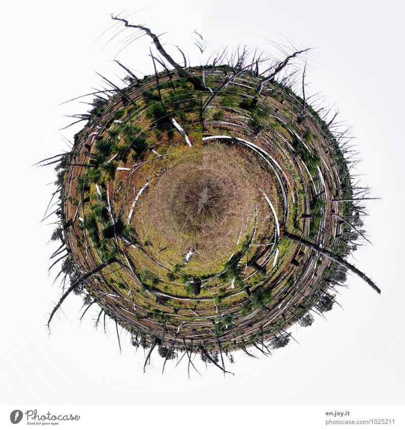 Der Kreis des Lebens Natur grün Wald Umwelt Bewegung Zeit Erde Wetter Wachstum Zufriedenheit Klima Wandel & Veränderung Hoffnung Zukunftsangst