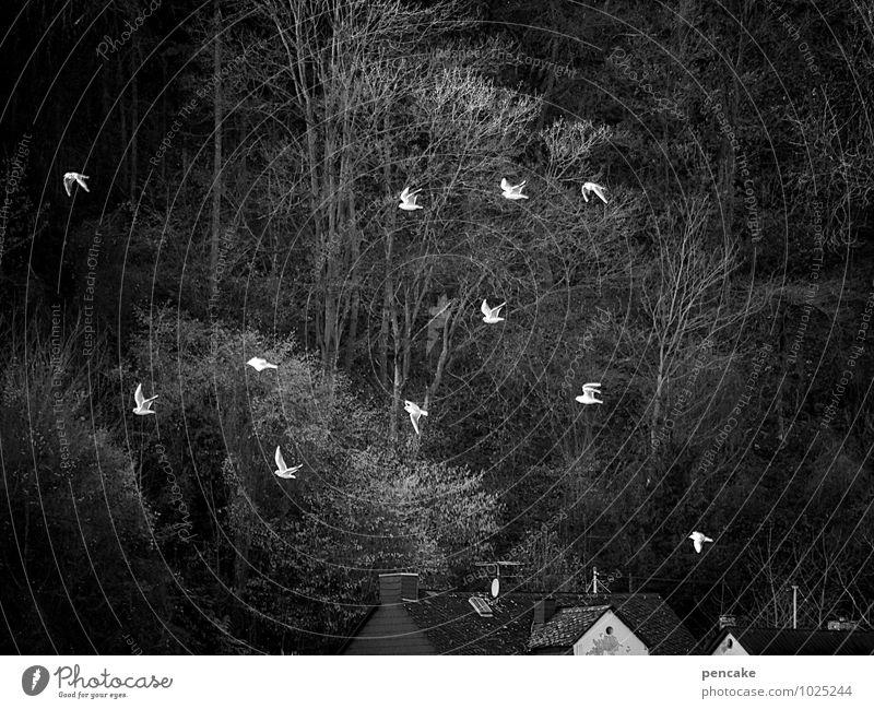 elferrat Landschaft Urelemente Winter Flussufer Tier Vogel Tiergruppe Schwarm Zeichen Bewegung fliegen toben Stimmung Fröhlichkeit Heimweh Möwenvögel