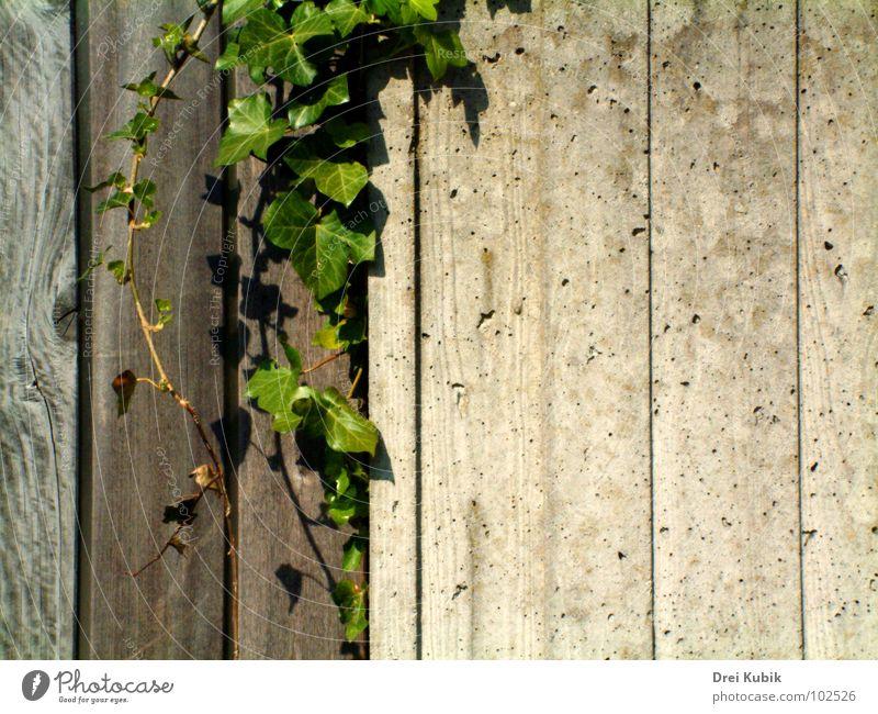 Concrete Wood Print grün Pflanze Holz Mauer Beton Efeu Druckerzeugnisse Gotteshäuser Holzmehl