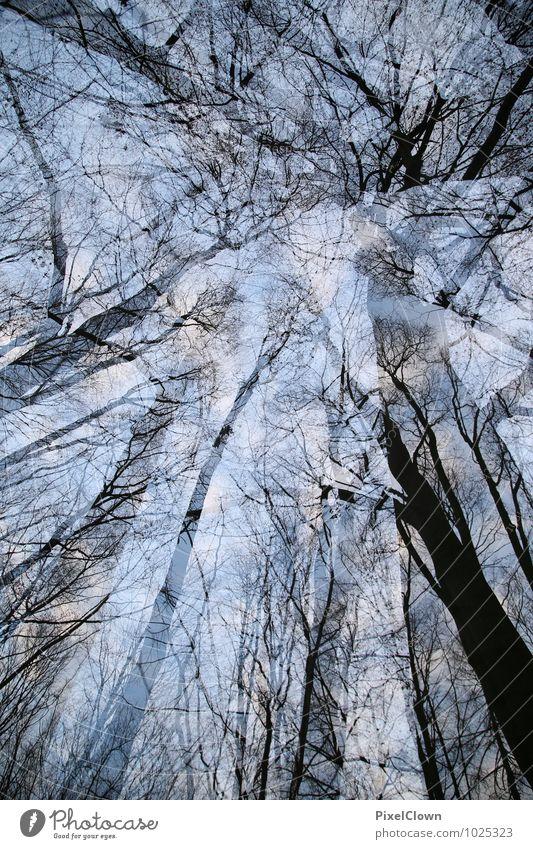 Waldrauschen Natur Ferien & Urlaub & Reisen blau Pflanze Baum Einsamkeit Landschaft Blatt Tier Ferne Gefühle Stil außergewöhnlich Stimmung träumen