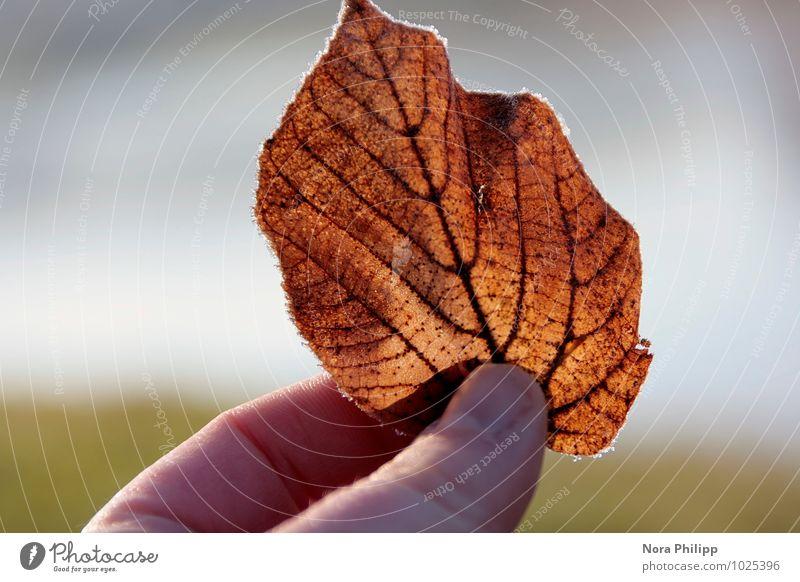 little beauty harmonisch Sinnesorgane ruhig Meditation Sonne Finger Daumen Umwelt Natur Pflanze Blatt träumen ästhetisch klein orange Glück schön achtsam