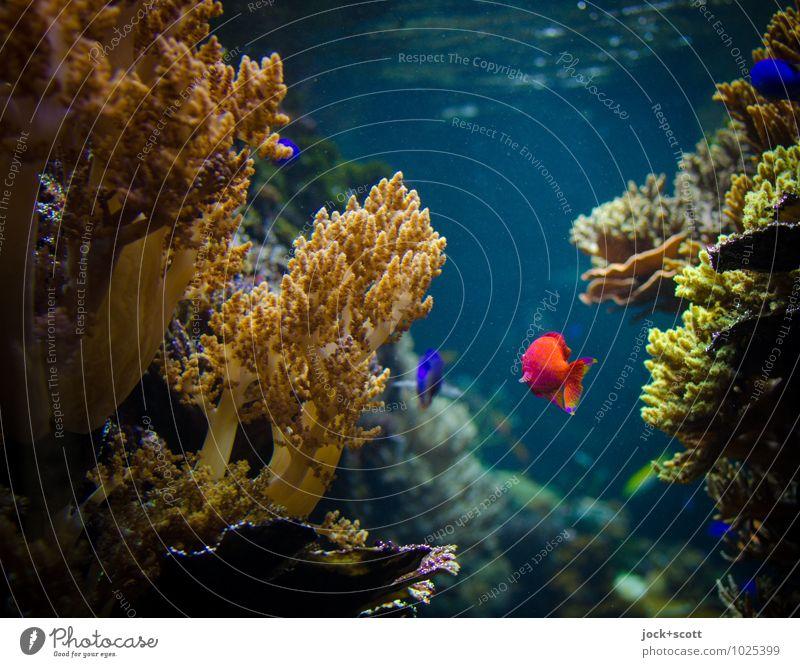 fischen im leben exotisch Wasser Fisch Aquarium Korallen Tier authentisch Flüssigkeit Einigkeit Warmherzigkeit friedlich erleben Idylle Leben nachhaltig rein