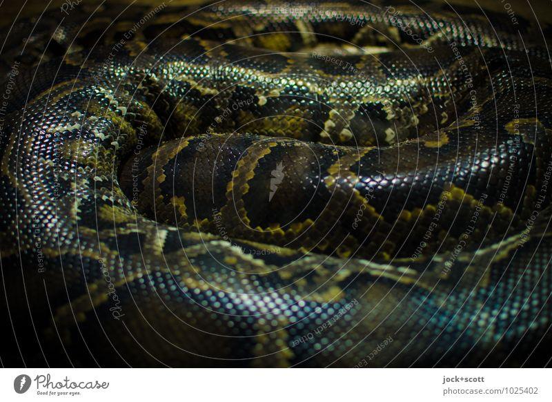 Schlangennest Erholung Tier Leben natürlich glänzend liegen Kraft authentisch warten bedrohlich Streifen Macht planen gruselig Wachsamkeit lang