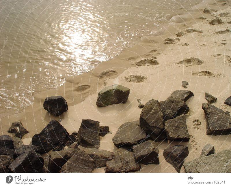kurzwelle Wasser Sonne Meer Strand Ferien & Urlaub & Reisen Hund Stein See Sand Küste Wellen nass Spuren Grenze Fußspur feucht