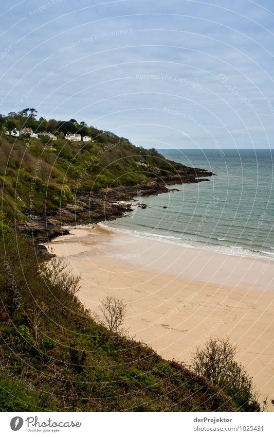 Cornwall ist schon sehr urig Natur Ferien & Urlaub & Reisen Pflanze Baum Landschaft Wolken Tier Strand Wald Umwelt Gefühle Küste Frühling Freiheit Felsen
