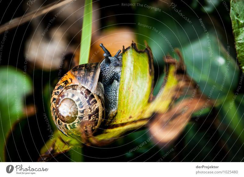 Mal ganz langsam Umwelt Natur Landschaft Pflanze Tier Urelemente Frühling Urwald Insel Schnecke sportlich schleimig Klischee Gefühle Tierliebe ruhig