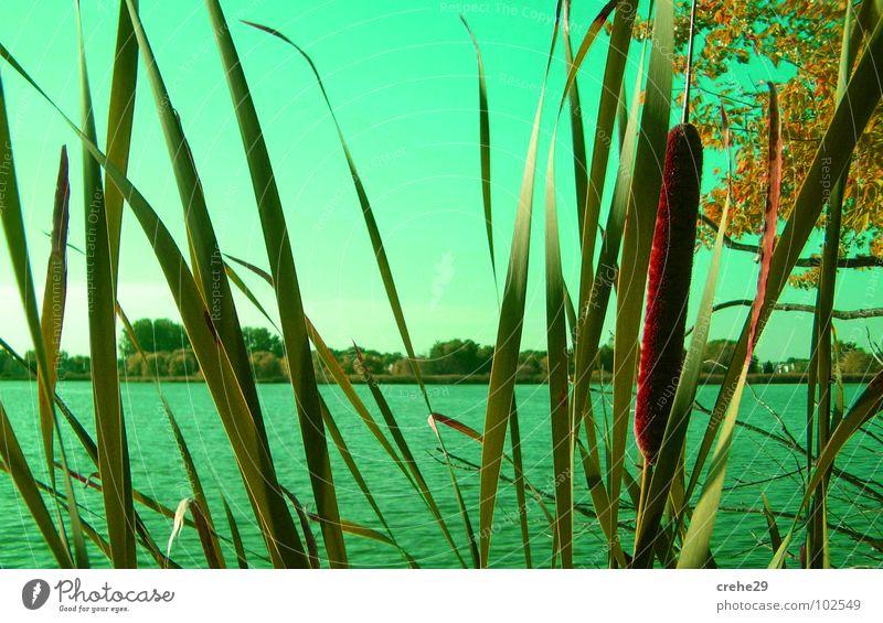 Auf der Lauer grün Strand Sommer Schilfrohr See Sträucher Gewässer Wasser Himmel Bambusrohr Sand Idylle Natur Versteck Küste