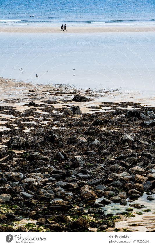 Zwei am Strand Natur Ferien & Urlaub & Reisen Pflanze Meer Landschaft Freude Ferne Umwelt Gefühle Küste Frühling Freiheit Freundschaft Zusammensein