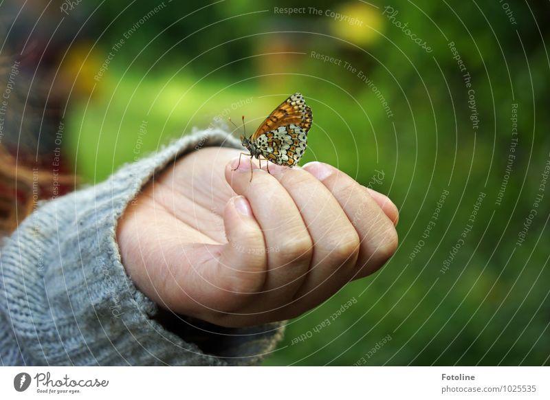 Falter küsst Mädchen Mensch feminin Kind Kindheit Hand Finger Umwelt Natur Tier Sommer Schönes Wetter Schmetterling Flügel 1 frei hell klein nah natürlich
