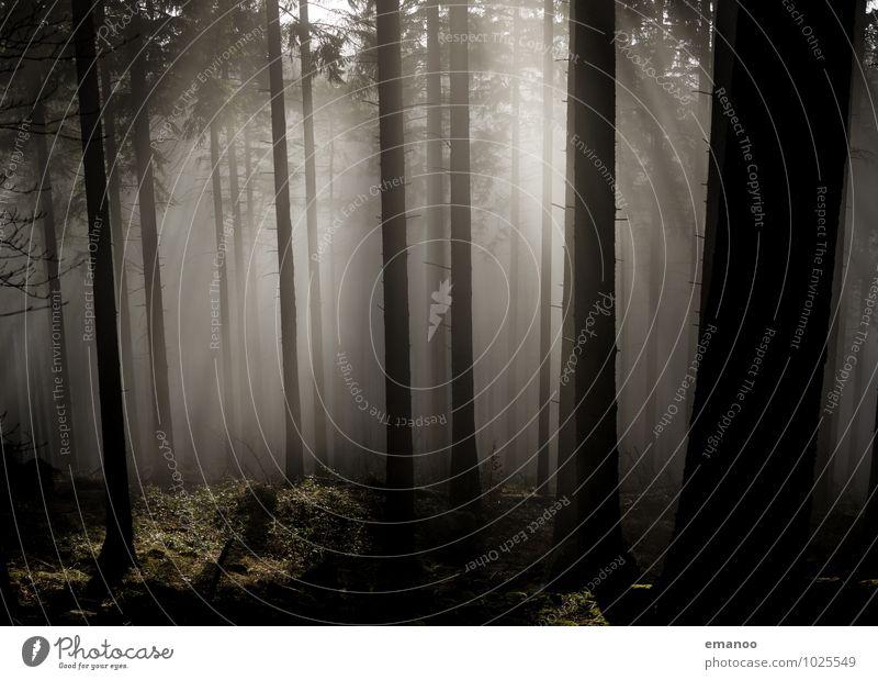 Licht im Schwarzwald Natur Ferien & Urlaub & Reisen Pflanze Wasser Baum Landschaft dunkel Wald kalt Berge u. Gebirge Umwelt Herbst Wetter Luft leuchten Nebel