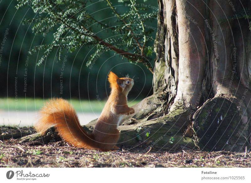 Da oben hängt noch was! Natur Pflanze grün Baum Tier Umwelt Frühling natürlich klein Garten hell Park orange Erde Wildtier Ast