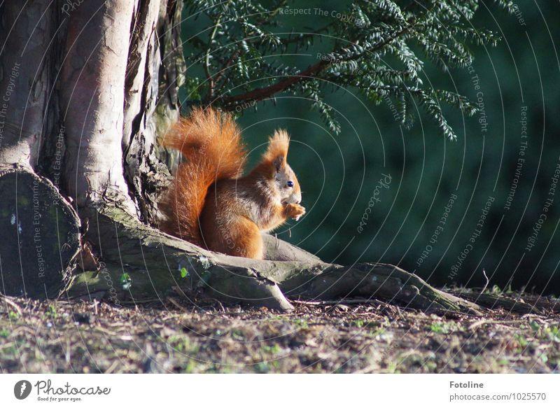 Frühstück! Natur Pflanze grün Baum Tier Umwelt natürlich Frühling klein Essen Garten Park orange Erde wild Wildtier