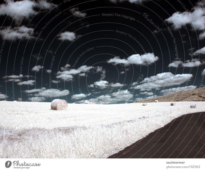 Futter für die Pferde Infrarotaufnahme Farbinfrarot Schwarzfilter Wolken schwarz weiß Holzmehl Licht Gras Wiese Pflanze grün Baum Waldrand Wäldchen Heuballen