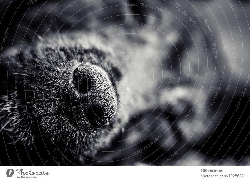 my dogs nose Tier Haustier Hund Schnauze Nase 1 schlafen Glück Tierliebe Schwarzweißfoto Detailaufnahme Makroaufnahme Schwache Tiefenschärfe