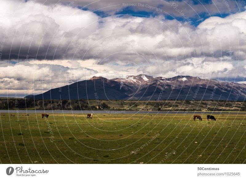Kühe in Argentinien Natur Ferien & Urlaub & Reisen Sommer Landschaft ruhig Wolken Tier Winter Berge u. Gebirge Umwelt Frühling Wiese Herbst Freiheit See