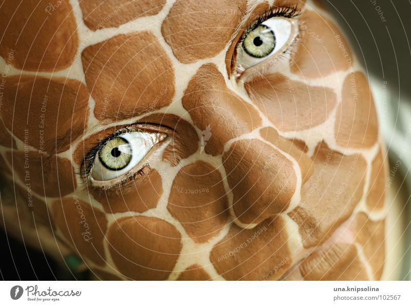 safari II Gesicht Auge Mund grün Wimpern intensiv Giraffe wildlife Fleck kulleräugig Hautausschlag Farbfoto Porträt Schminke Blick in die Kamera