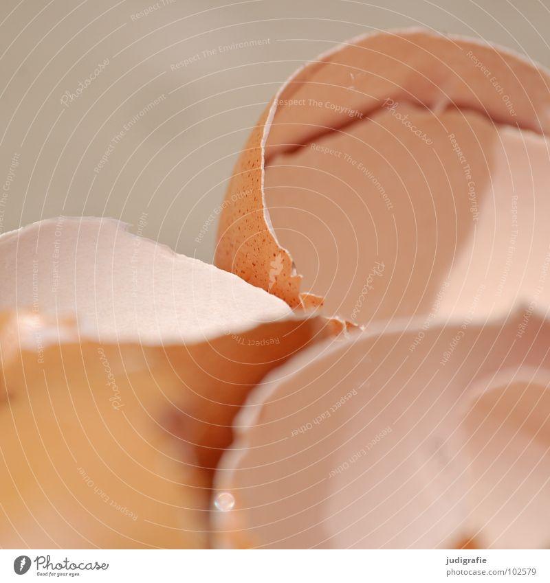 Rührei braun Lebensmittel Vogel glänzend leer Ernährung Kochen & Garen & Backen kaputt Papier Küche Appetit & Hunger Ei Schalen & Schüsseln gebrochen Verpackung