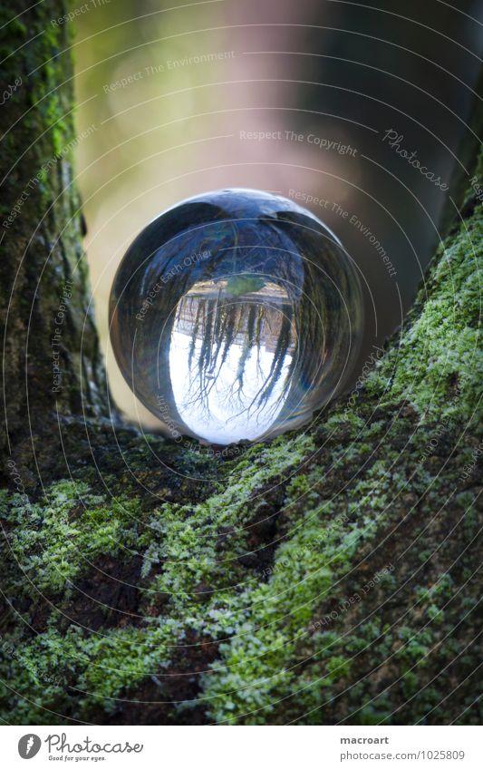Gläserne Welt Glaskugel Natur Gras Wiese Erde Kristalle Ball durchsichtig natürlich Reflexion & Spiegelung Spiegelbild Moos Farn grün Pflanzenschädlinge Baum