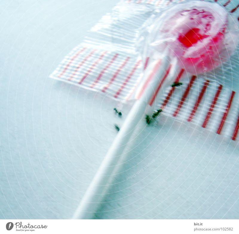 AMEISENBEWEGUNG IV Ameise Tier Insekt Arbeiter Ameisenhügel fleißig Lollipop süß Süßwaren drehen Bewegung Fressen Mahlzeit Ernährung Diebstahl Parasit Teamwork