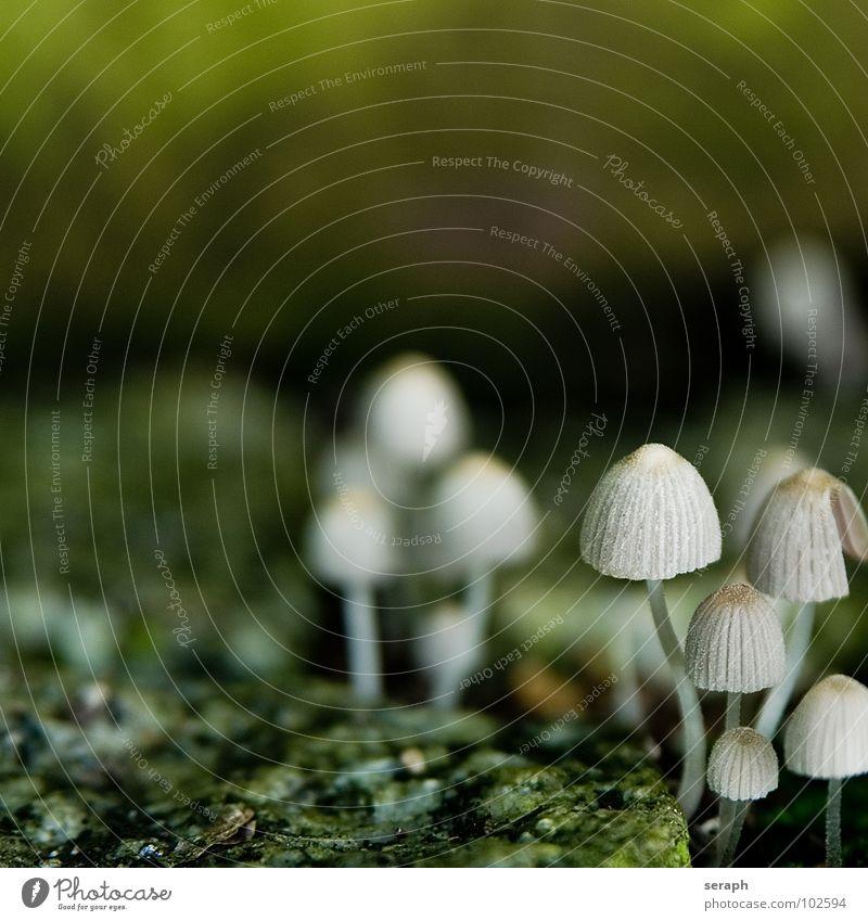 Pilzland Moos Sporen Flechten Natur mehrere Knolle Pilzhut kappe Lamelle Umwelt Pflanze Botanik Herbst herbstlich ökologisch mykologie Symbiose Detailaufnahme