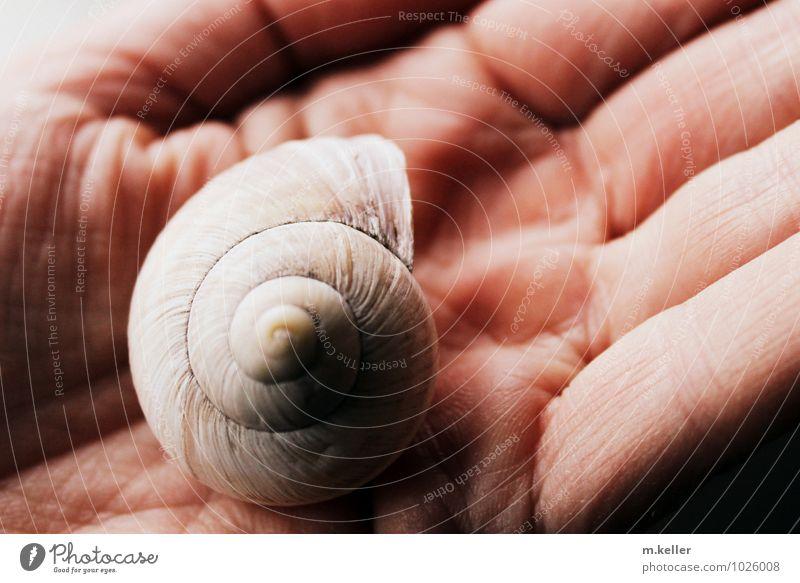 Fundstück Mensch Hand Erotik Umwelt Haut ästhetisch Schutz Umweltschutz Schnecke Umweltverschmutzung Sinnesorgane Schwäche