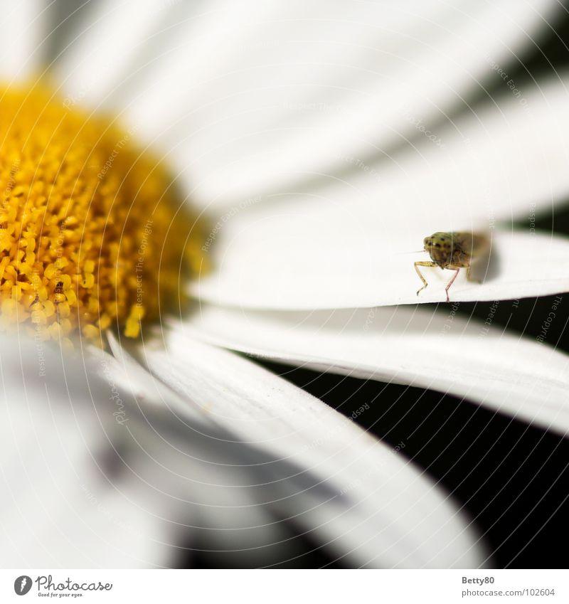 Auch Insekten chillen Natur Blume Sommer ruhig Erholung Blüte Frühling Wärme Fliege sitzen Pause Insekt Blühend Sonnenbad Sitzgelegenheit bequem