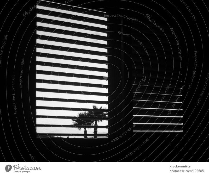 Wo bin ich? Fenster Palme Gegenlicht Ferien & Urlaub & Reisen Raum Fensterladen Spanien Streifen gestreift aufwachen Morgen Schwarzweißfoto