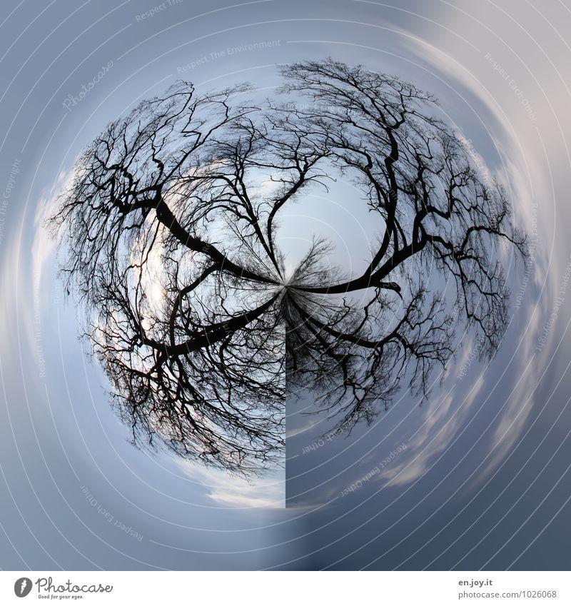 verzweigt Himmel Natur blau Pflanze Baum Landschaft Winter Wald kalt Umwelt Erde Horizont träumen Wachstum Kraft Klima
