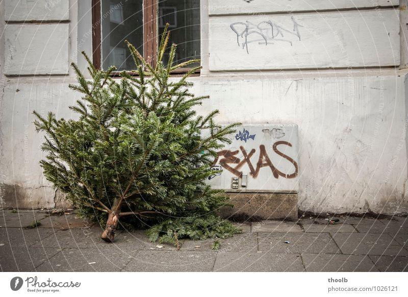Weihnachtsbaum danach Natur Weihnachten & Advent grün Baum Winter Fenster Liebe Wege & Pfade Fassade dreckig Dekoration & Verzierung Dinge Vergänglichkeit kaputt Wandel & Veränderung Verfall