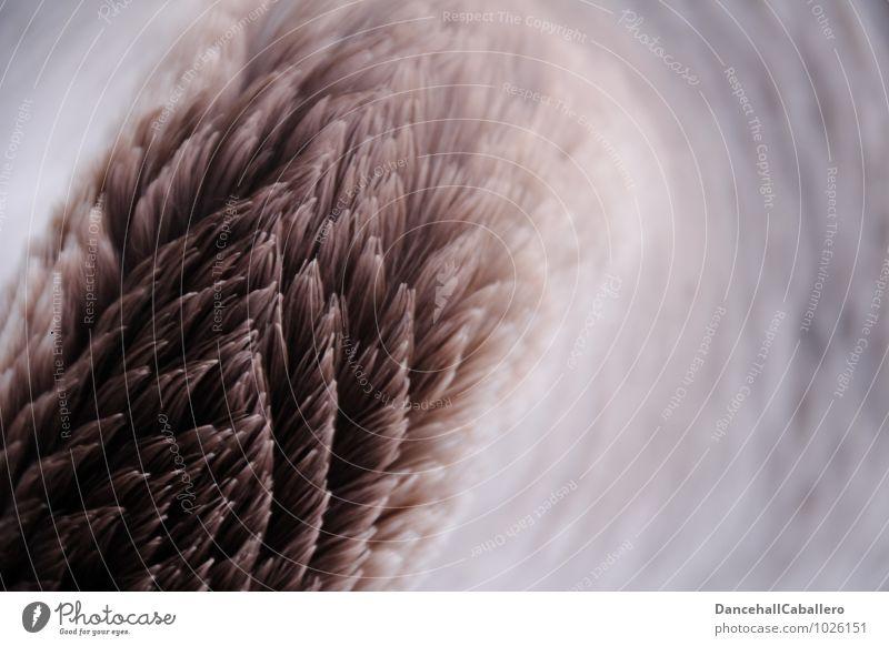 Federkleid Tier Vogel Gans Federvieh Design Farbe Natur Muster Linie Hals Ordnung Verlauf schön Farbfoto Nahaufnahme Detailaufnahme Strukturen & Formen