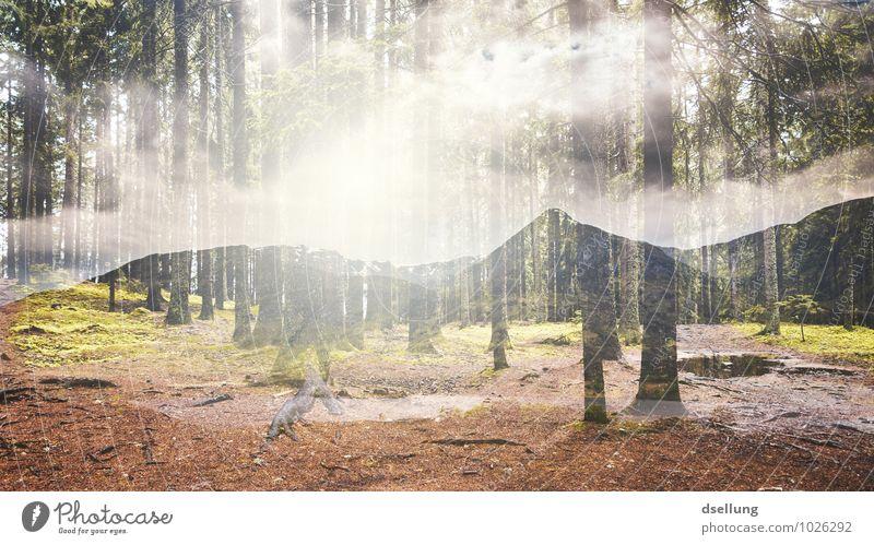 natur pur. Ferien & Urlaub & Reisen Ausflug Abenteuer Ferne Freiheit Sommerurlaub Berge u. Gebirge wandern Umwelt Natur Landschaft Pflanze Wolken Frühling