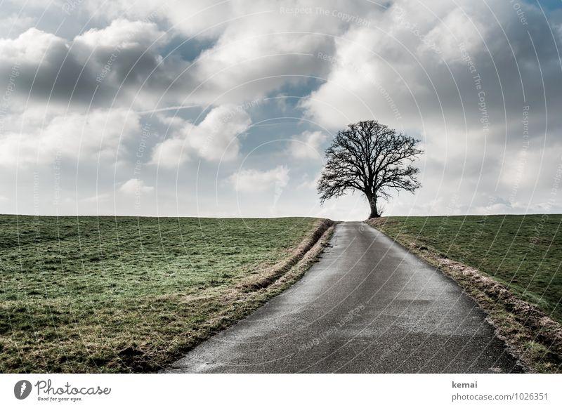 Horizont Himmel Natur Baum Einsamkeit Landschaft ruhig Wolken Winter Umwelt Straße Wege & Pfade außergewöhnlich Eis Feld leer Schönes Wetter