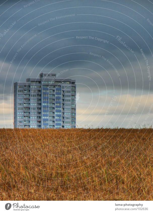 Einsamer Riese Ernte Weizen Ähren Feld Kornfeld Gerste Landwirtschaft Bauernhof Herbst Fußweg Wiese Spurrinne ländlich Unwetter Wolken schlechtes Wetter Sturm