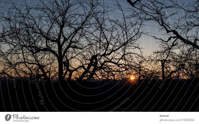 Sonnengeflecht Natur Landschaft Wolkenloser Himmel Sonnenaufgang Sonnenuntergang Sonnenlicht Schönes Wetter Baum Ast Zweig Baumstamm Feld leuchten frisch