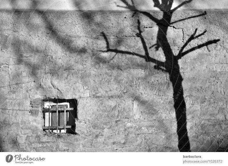 Wo sind sie geblieben? Mittelalter Baum Altstadt Haus Mauer Wand Fassade Fenster Gitter Stein bedrohlich dunkel einfach Gefühle Stimmung Einsamkeit Traurigkeit