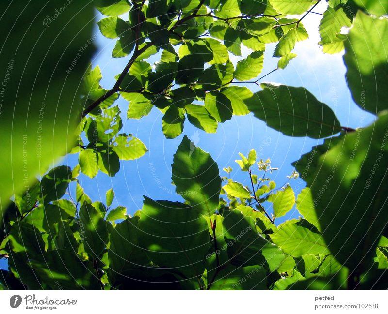 Im Garten Eden VII Natur Himmel Baum grün blau Sommer Freude Blatt Wolken gelb Frühling Wetter Ast Baumstamm Gott