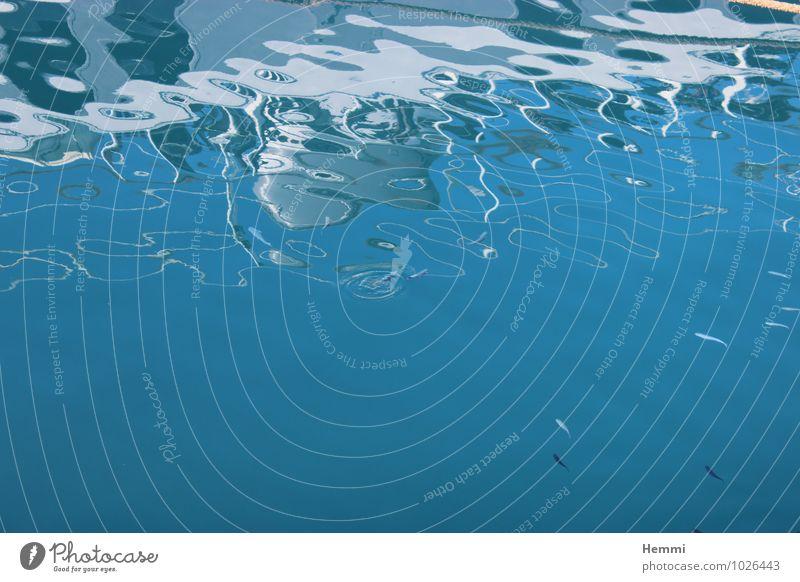neugierige Fische Natur blau weiß Meer Tier Umwelt Küste See Wellen ästhetisch Tiergruppe Coolness Fluss Bucht