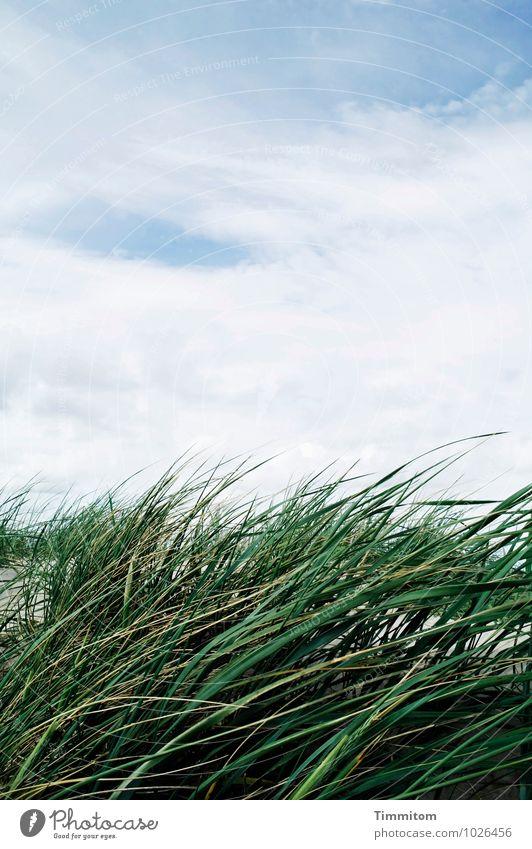 Eine Brise. Himmel Natur blau Pflanze grün weiß Sommer Erholung Landschaft Wolken Umwelt Gefühle natürlich Sand Zufriedenheit ästhetisch