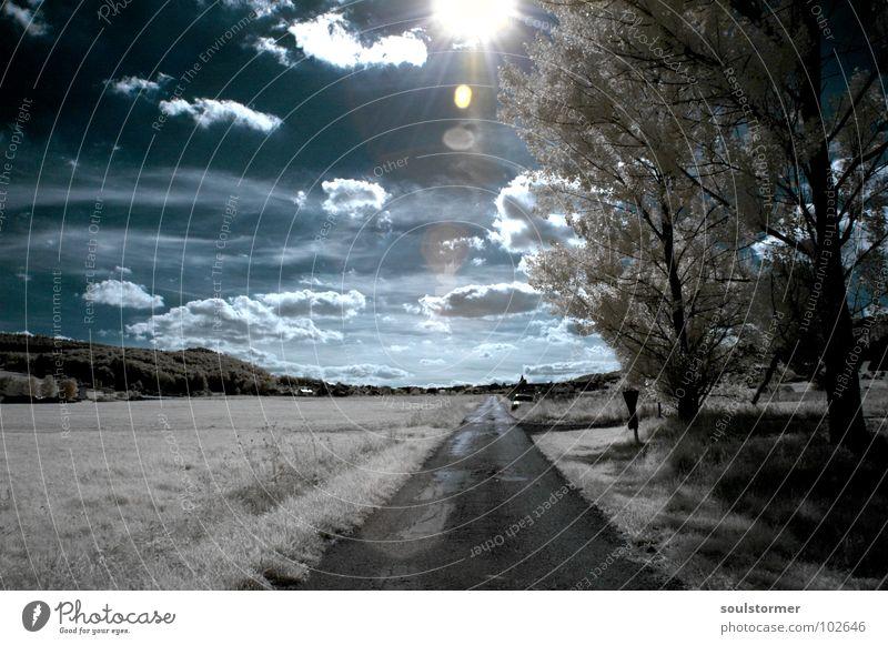 Immer zur Sonne hin Himmel blau weiß Baum rot Sonne Wolken schwarz Wiese Schnee Gras Wege & Pfade lustig Denken träumen Beleuchtung