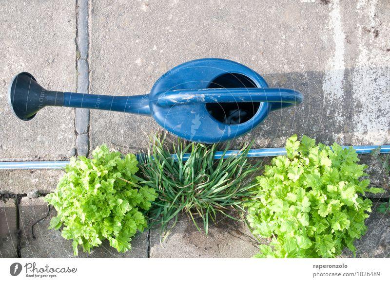 Zementgarten Freizeit & Hobby Garten Gartenarbeit Pflanze Gras blau grau grün Fürsorge gießen Gießkanne Beton betoniert zementiert sprießen Stadt