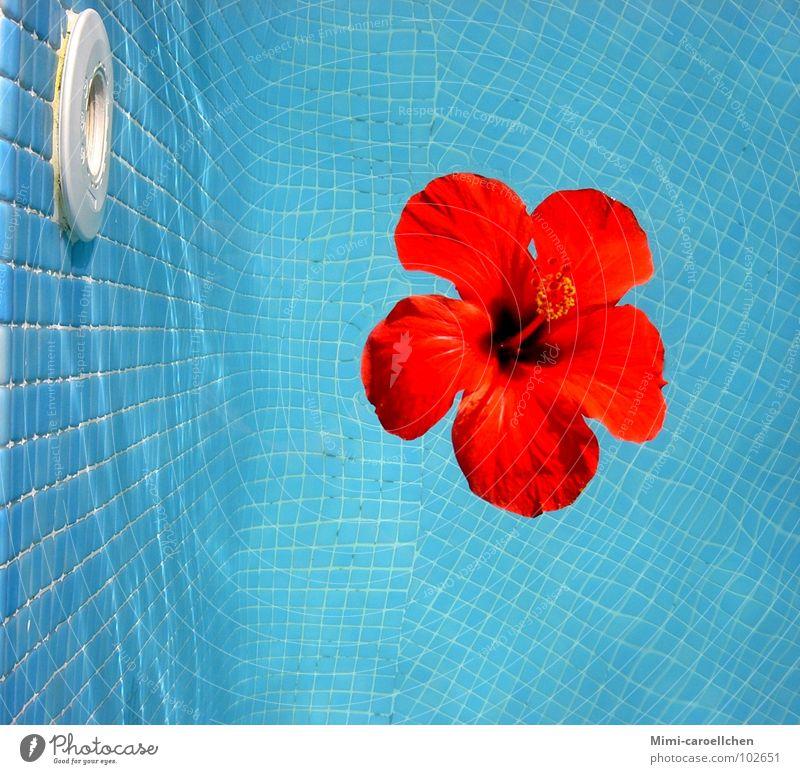 a touch of summer... Hibiscus rot gelb Blume groß Schwimmbad Lichtspiel klein Quadrat Mosaik Sommer ruhig Erholung Farbenspiel Reichtum Außenaufnahme hell