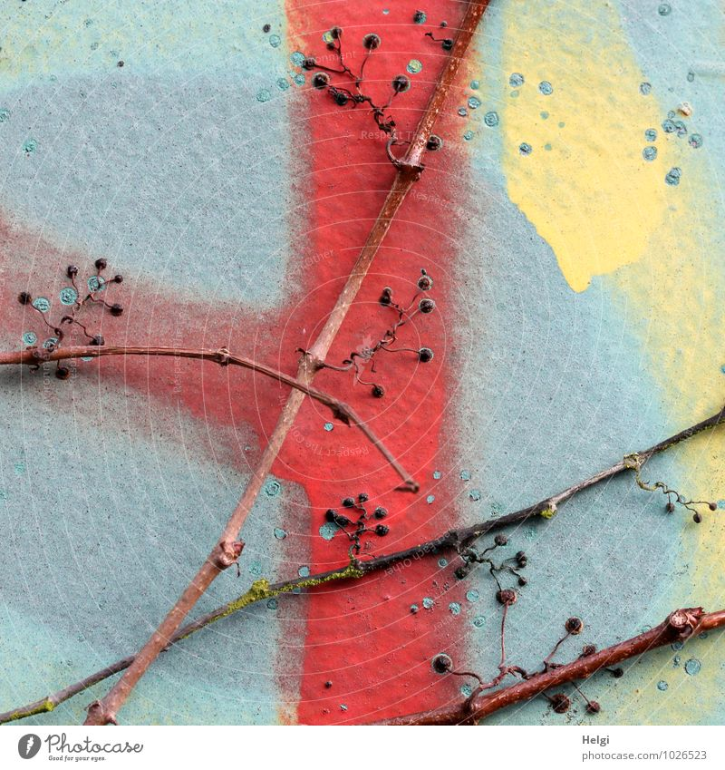 angedockt... Natur alt blau Pflanze Farbe rot Winter gelb Wand Mauer grau außergewöhnlich Stein Linie braun authentisch