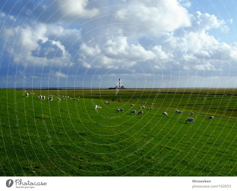 Westerhever Leuchtturm Himmel Strand Wolken Ferne Küste Schaf Nordsee Schleswig-Holstein Deich Nordfriesland