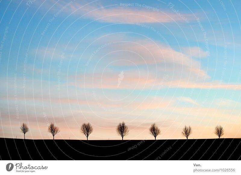 die 7 Zwerge Natur Landschaft Erde Himmel Wolken Pflanze Baum Allee Feld Horizont blau schwarz Freiheit Ferne Farbfoto mehrfarbig Außenaufnahme Menschenleer