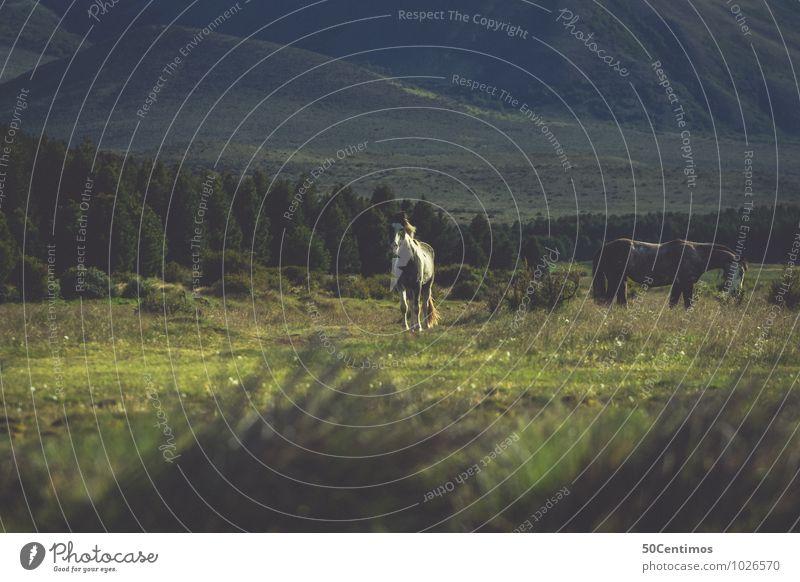 Wildpferde Reitsport Umwelt Natur Landschaft Grünpflanze Wiese Feld Wald Berge u. Gebirge Patagonien Argentinien Tier Pferd 2 Herde Abenteuer Freiheit