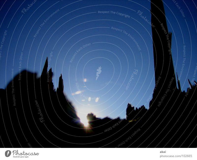 Lichterspiel am Schauinsland 3 Baum Sonne blau Berge u. Gebirge Sturm Ruine Baumstamm Spinne krumm Spinnennetz himmelblau Schwarzwald Freiburg im Breisgau Orkan