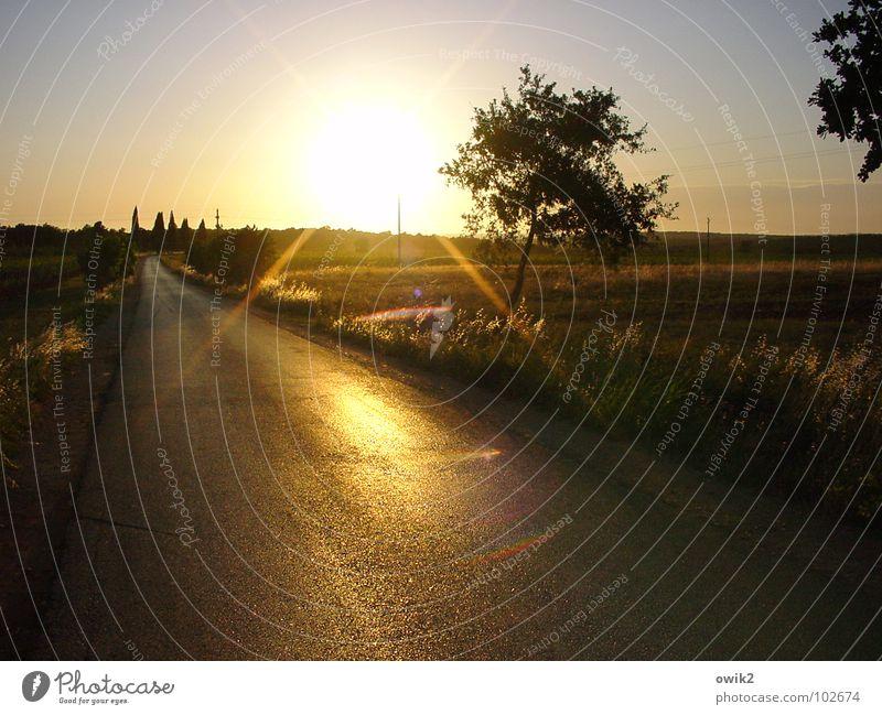 Abend in Istrien Natur Ferien & Urlaub & Reisen Sommer Sonne Baum Landschaft Ferne Umwelt Straße Wärme Wege & Pfade Freiheit hell Horizont Wetter Feld